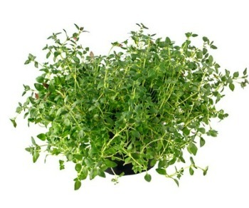 Is Thyme Good for Acne?